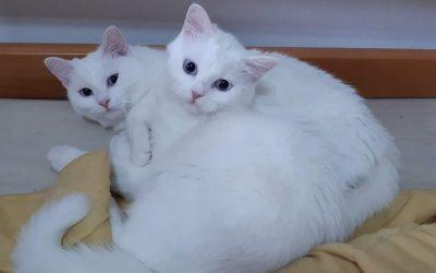 Bianka a Bibka